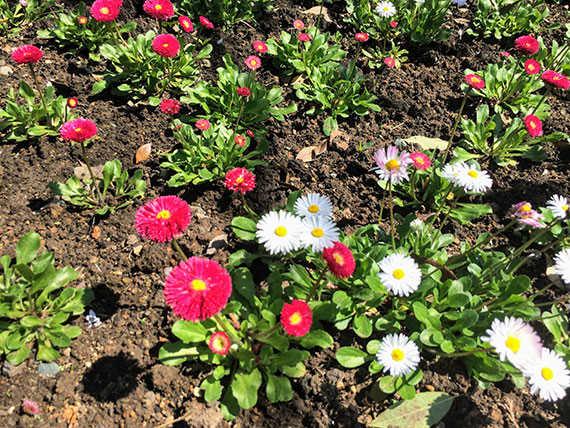грузия весной