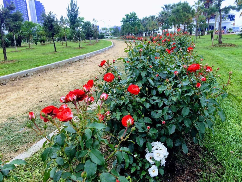 миллион алых роз в батуми